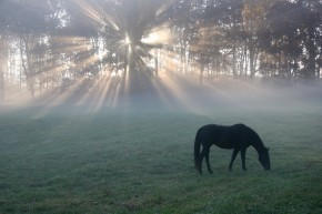 horse-light-horizontal-lee
